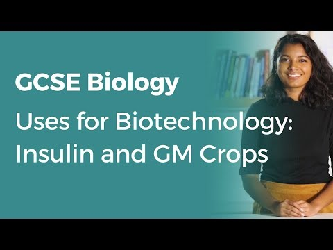 Uses for Biotechnology: Insulin and GM Crops | 9-1 GCSE Biology | OCR, AQA, Edexcel