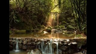 深層睡眠天然森林音樂 thumbnail