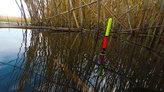 Ловля Карася и КРУПНОЙ ПЛОТВЫ Рыбалка на утренней зорьке на поплавок Караси на обычную удочку