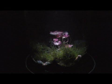 Night Aquarium LED