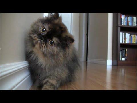 Curious Cat / 興味津々な猫