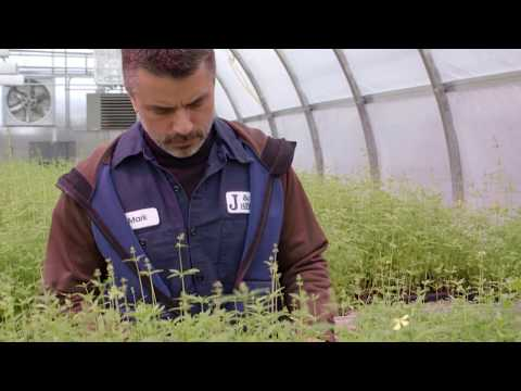 Planting the Seeds for Industrial Hemp in New York State