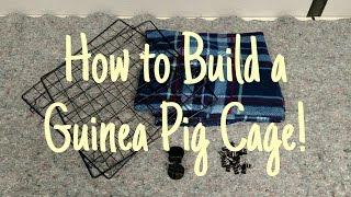 Guinea Pig Cage Setup