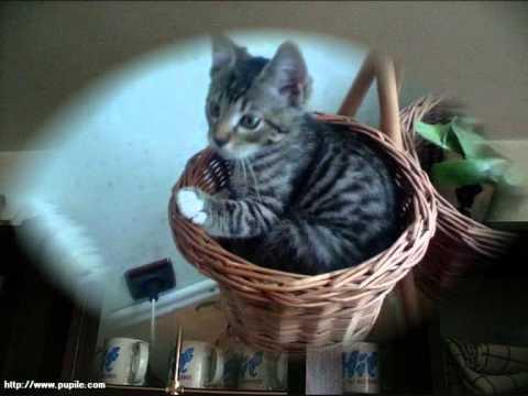 Kot W Pustym Mieszkaniu W Nawiązaniu Do Wiersza Wisławy Szymbor