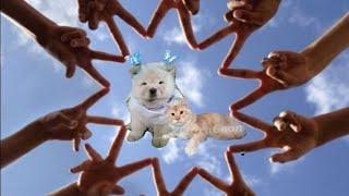 Коты и собаки друзья Видео до слез