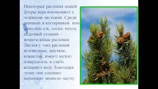 презентация растения зимой