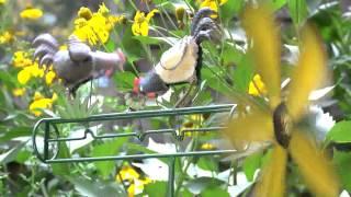 Metal Chicken Whirligig - Plow & Hearth