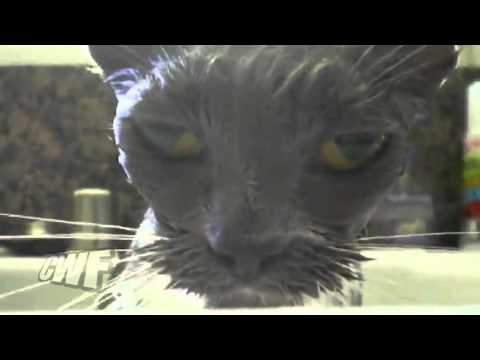 CuteWinFail Ep. 64: Talking Cat