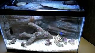Mini Diy 10,000k / Actinic Hanging Light Fixture For A Mini Marine Aquarium