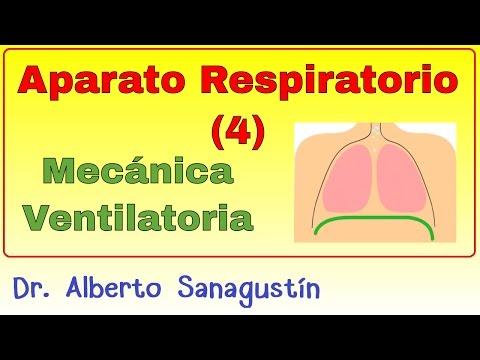 Aparato Respiratorio (4): Mecánica Ventilatoria