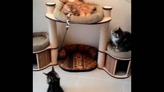 Домик игровой комплекс для кошек мейн кун