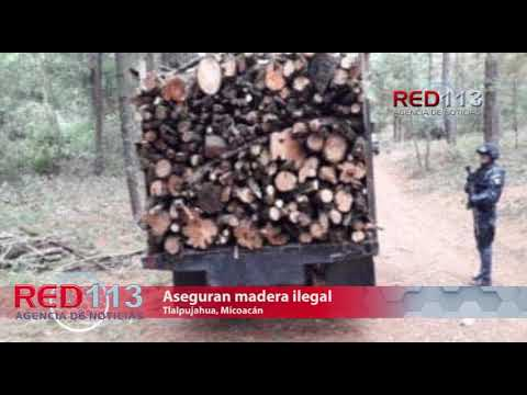VIDEO Aseguran madera ilegal