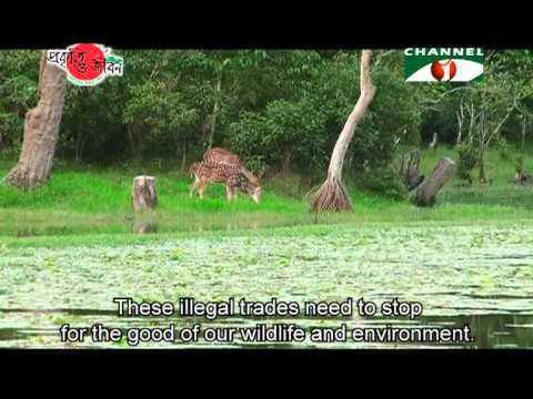 Nature and Life   Episode 53 Wildlife Trade