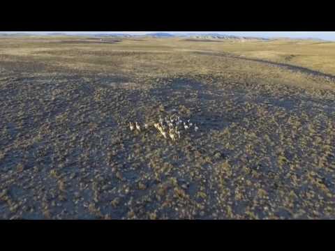 Antelope Running Through Wyoming - Drone Video