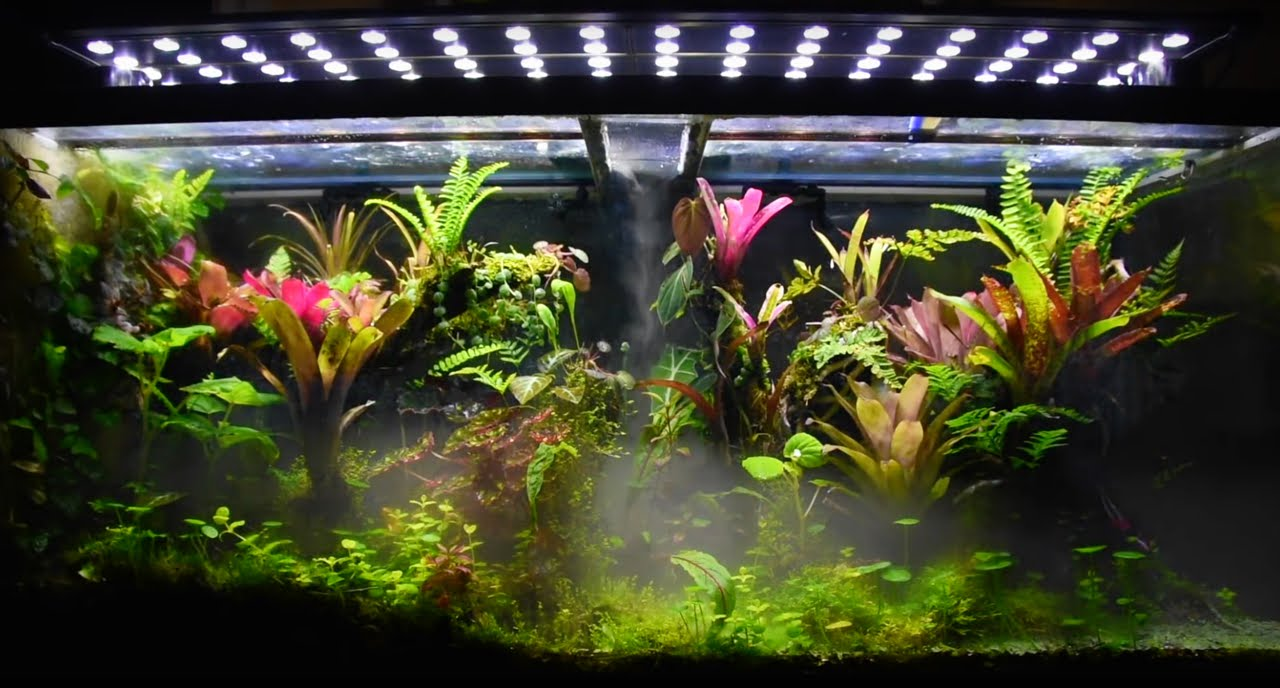 Vivarium Fog Forest Youtube