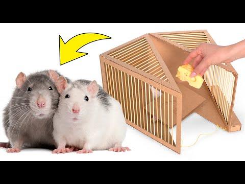 Как сделать безвредную крысиную ловушку из картона
