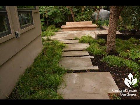 Berkeley Sedge Groundcover Daphne Richards Central Texas Gardener