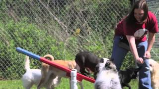 Red Bluff Pet Resort - Short | Pasadena, Tx
