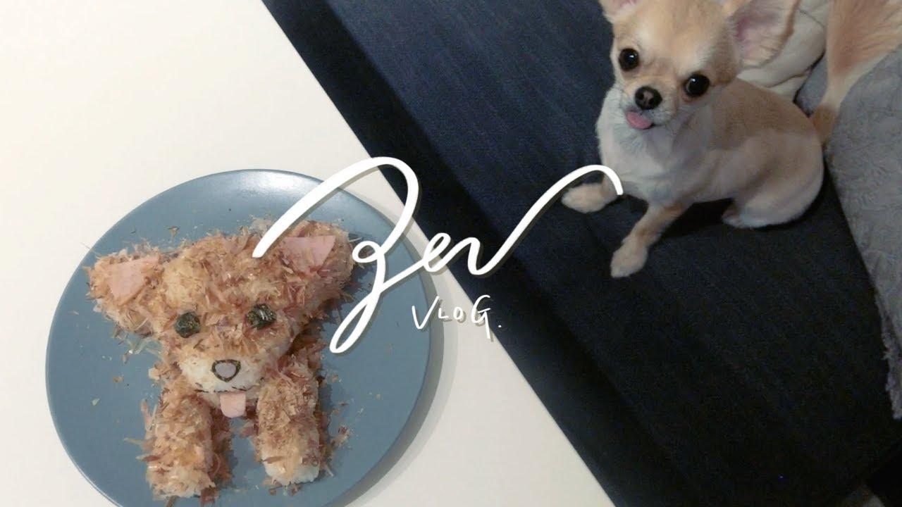 【チワワとふたり暮らしvlog】愛犬おにぎりを作ってみた