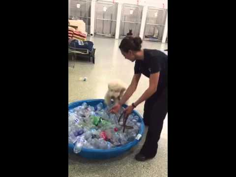 Training Willow 8 – 20 weeks old. Therapy dog