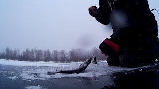 Рыбалка в Киеве зимой. На гирлянду.