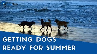 How Group Training Classes Can Prepare Your Dog For Summer - DogTech