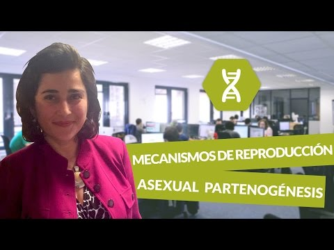 Reproduccion asexual fragmentation biologia matura