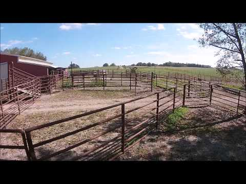 320+- Acre Cattle Farm Near Carrollton, Georgia For Sale