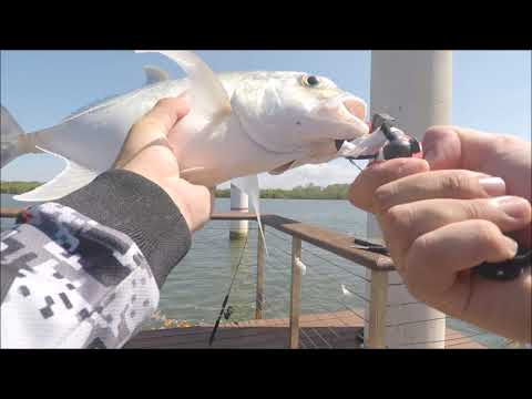 Gold Coast Land Based Fishing Ep1 - Screaming Drag On Live Bait.