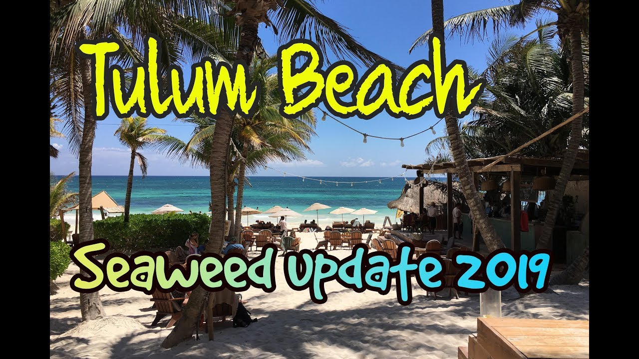 Tulum Beach - Seaweed update 2019