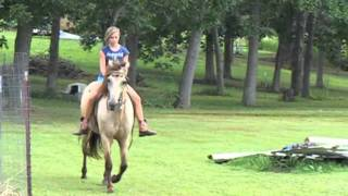 The Difference A Bit Makes On A Gaited Horse