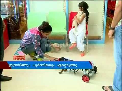 Star couple  adopt  Disabled Dog :നിമയെ ദത്തെടുക്കാന് താരങ്ങള്