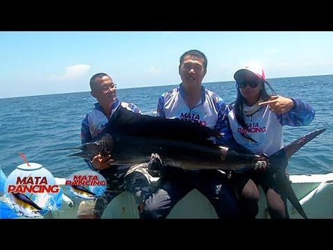 Petarungan Sengit Melawan Ikan Layaran - Mata pancing (8/10)