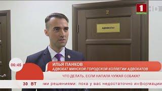 Напала собака (БТ, Добрай ранiцы, 30.07.2019) - Илья Панков, адвокат (Минск)