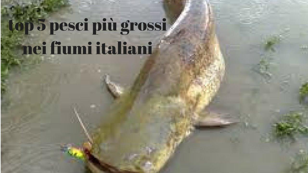 Top 5 pesci grossi nei fiumi italiani youtube for Pesci di fiume