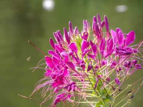 ดอกไม้ - ไหมไทย