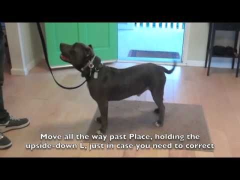 Learn To Train The Good Dog Way: Place Command - The Good Dog Training Tips!