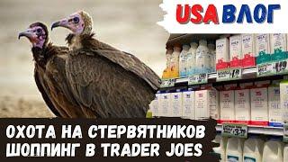Охота на стервятников Шоппинг в Trader Joes Полезный брауни Влог США