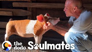 Pig Loves To Launch Himself Onto His Dad's Lap | The Dodo Soulmates