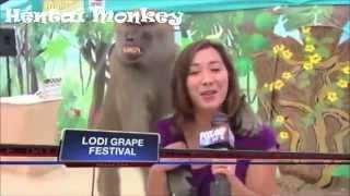 Hentai Animals 2 : Monkey