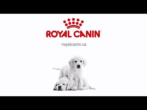 Royal Canin – Puppy
