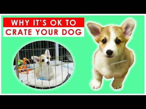 best-dog-crates-for-crate-training-a-puppy-or-dog