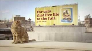 Go-Cat: Bobo the free-running cat