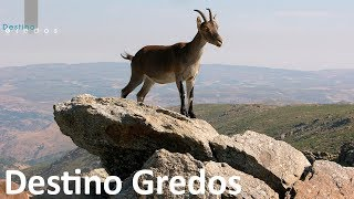 Video Destino Gredos