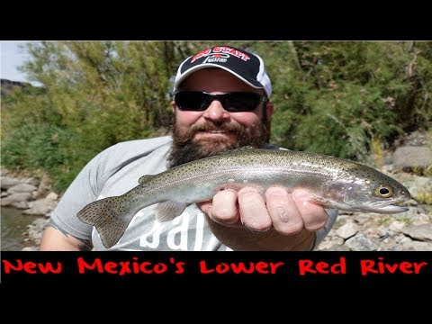 Trout Fishing New Mexico's Lower Red River