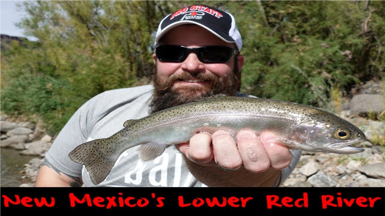 Trout fishing new mexico 39 s lower red river youtube for Red river new mexico fishing