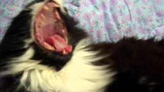 Посвящается Кошке Лиске, ушедшей на Мост Радуги(