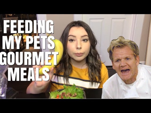 i-tried-making-my-pets-gourmet-meals-and-gordon-ramsay-was-no-help