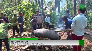 VTC14 | Độc đáo lễ cúng rừng của người Mông ở Lai Châu