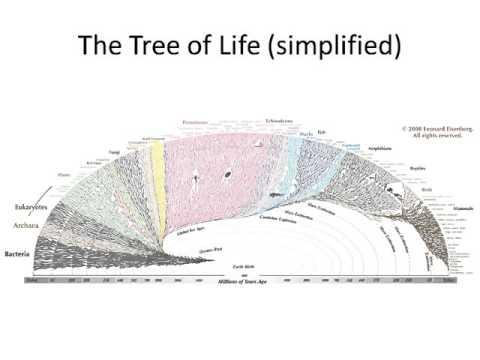 Vertebrate Evolution I
